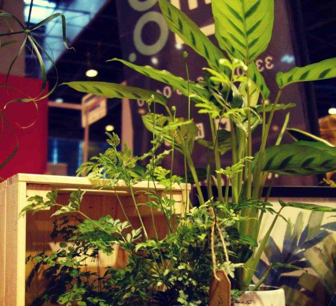 La_Belle_Brouette_Workspace_Salon_Stand_Vegetal_Paysagiste_Decorateur_Interieur_05