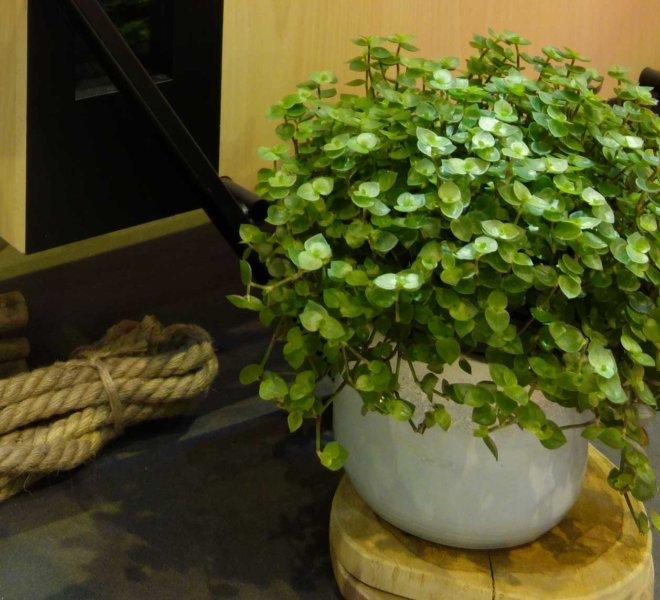 La_Belle_Brouette_Workspace_Salon_Stand_Vegetal_Paysagiste_Decorateur_Interieur_09